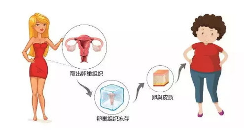 """""""卵巢组织冻存移植技术""""亮相2018 年全国科技活"""